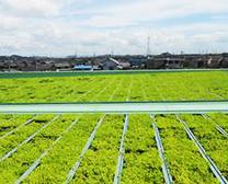 都市ビル緑化の画像